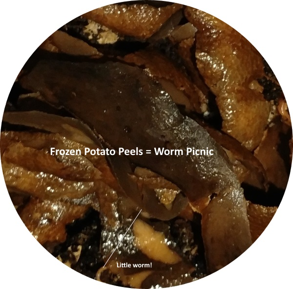 Potato peelings are frozen for the worms in photo.