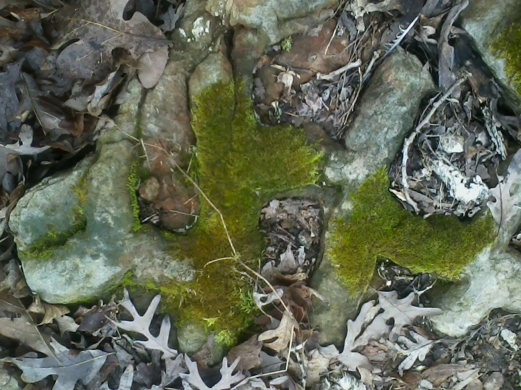 Photo of moss growing on a fossil stone