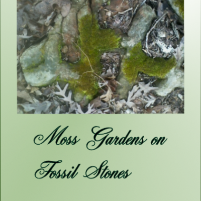 Unexpected Moss Gardens in the Ozarks