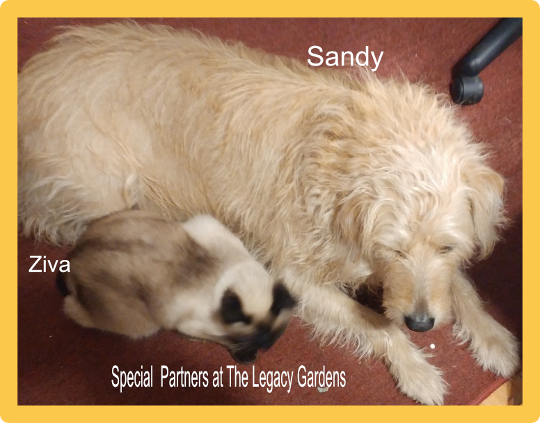 Photo of the dog and cat who are partners at The Legacy Gardens.