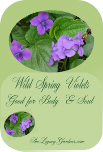Image of wild violet flowers and leaves at The Legacy Gardens.