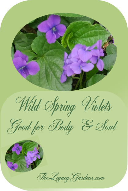 Image featuring wild violet flowers at The Legacy Gardens..