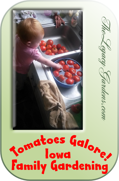 graphic with image of small child at kitchen sink washing tomatoes grown in Iowa family garden