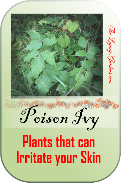 graphic featuring poison ivy, an irritating plant that causes itchy, painful skin rashes