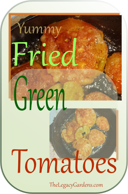 image of fried green tomatoes in cast iron skillet