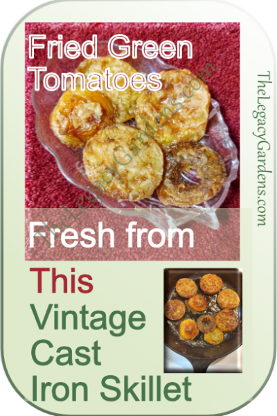 Fried Green Tomatoes – Tips & Recipe