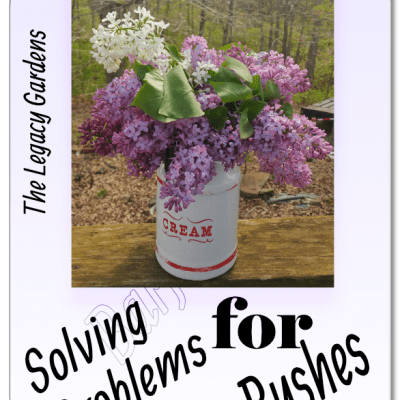 The Lilac bushes Make Demands — The Answer is no!